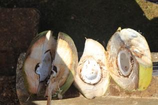 More Coconuts